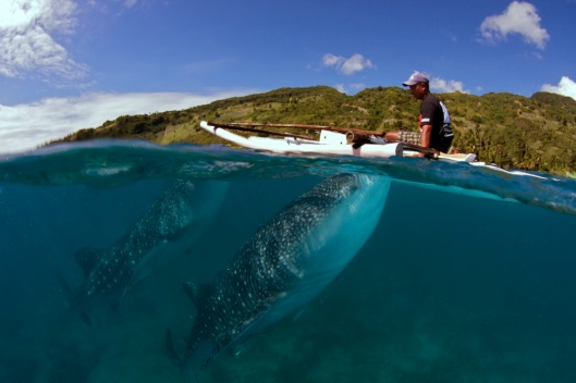 Whale-sharks-in-Oslob-Cebu-126